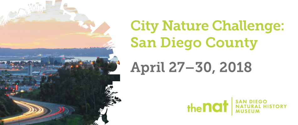 City Nature Challenge Poster